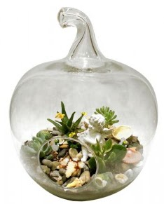 Orta boy elma terrarium 5 kaktüs  Ulus Ankara güvenli kaliteli hızlı çiçek