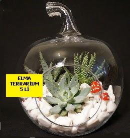 5 kaktüslü Elma terrarium orta boy  Ulus Ankara kaliteli taze ve ucuz çiçekler