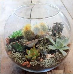 Cam fanusta 7 kaktüslü terrarium  Ulus Ankara 14 şubat sevgililer günü çiçek
