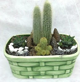 Seramik içerisinde 5 kaktüslü terrarium