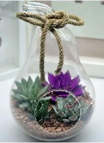 Orta boy armut 3 kaktüs terrarium  Ulus Ankara hediye sevgilime hediye çiçek