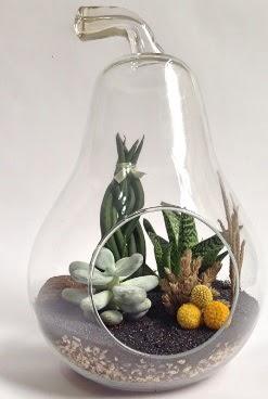 Orta boy armut 5 kaktüs terrarium