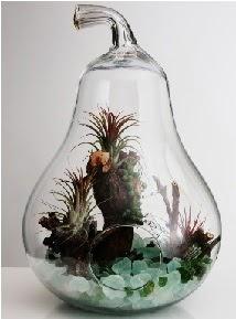 Orta boy Armut 6 adet kaktüs terrarium  Ulus Ankara 14 şubat sevgililer günü çiçek