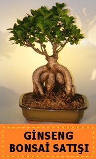 Ginseng bonsai satışı japon ağacı  Ulus Ankara güvenli kaliteli hızlı çiçek