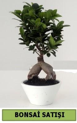 Bonsai japon ağacı satışı  Ulus Ankara çiçek gönderme
