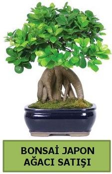 Bonsai japon ağacı satışı