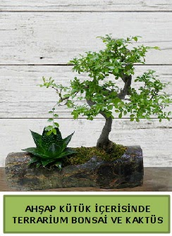 Ahşap kütük bonsai kaktüs teraryum  Ulus Ankara çiçek servisi , çiçekçi adresleri