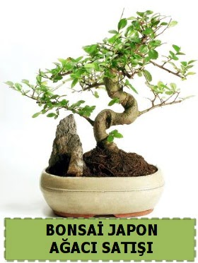 Bonsai japon  ağacı satışı Minyatür İthal  Ulus Ankara çiçek servisi , çiçekçi adresleri