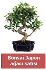 Japon ağacı bonsai satışı  Ulus Ankara anneler günü çiçek yolla