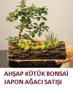 Ahşap kütük içerisinde bonsai ve 3 kaktüs  Ulus Ankara 14 şubat sevgililer günü çiçek