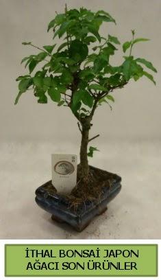 İthal bonsai japon ağacı bitkisi  Ulus Ankara çiçek gönderme sitemiz güvenlidir