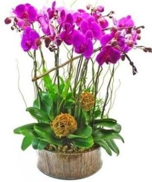 Ahşap kütükte lila mor orkide 8 li  Ulus Ankara hediye sevgilime hediye çiçek