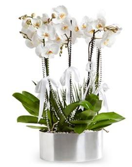 Beş dallı metal saksıda beyaz orkide