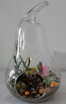 Orta boy cam armut terrarium