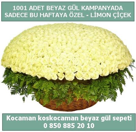 1001 adet beyaz gül sepeti özel kampanyada