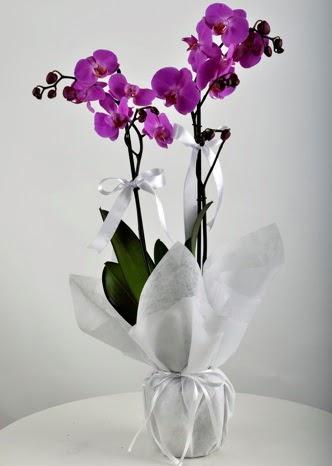 Çift dallı saksıda mor orkide çiçeği  Ulus Ankara çiçek mağazası , çiçekçi adresleri
