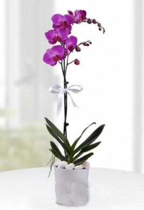 Tek dallı saksıda mor orkide çiçeği  Ulus Ankara çiçek online çiçek siparişi