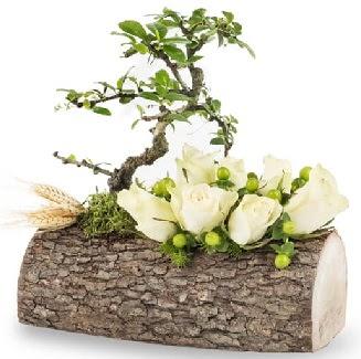 Doğal kütükte bonsai ağacı ve 7 beyaz gül