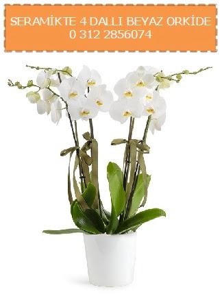 Seramikte 4 dallı beyaz orkide  Ulus Ankara çiçek online çiçek siparişi