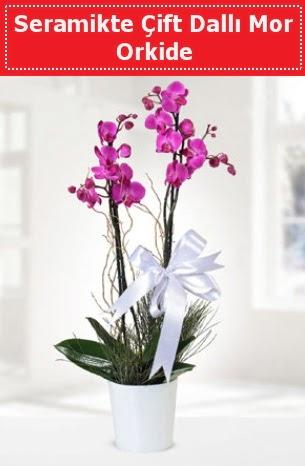 Seramikte Çift Dallı Mor Orkide  Ulus Ankara İnternetten çiçek siparişi