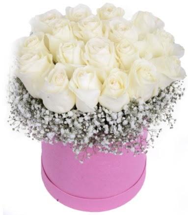 Renkli kutuda 19 adet beyaz gül  Ulus Ankara hediye sevgilime hediye çiçek