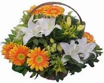 Ulus Ankara hediye çiçek yolla  sepet modeli Gerbera kazablanka sepet
