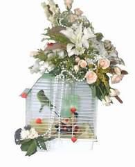 Ulus Ankara online çiçekçi , çiçek siparişi  Muhabbet kusu ve çiçekler