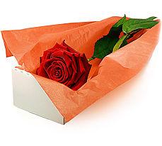 Ulus Ankara çiçekçi telefonları  Kutuda tek gül özel kisilere
